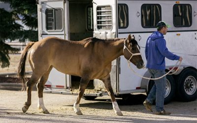Horse Transport For the Horse Lovers