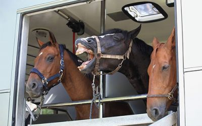 Things to Consider When Choosing a Horse Transport Company