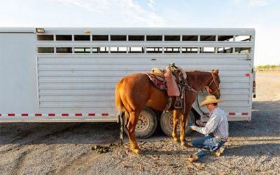 Horse Transport: A Few Things to Consider