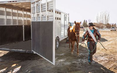 Horse Transport – Transporting Your Horse For Horse Transportation