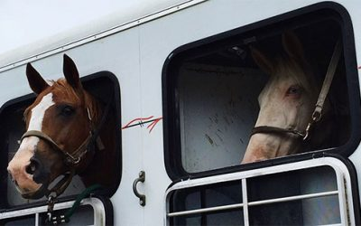 Horse Transportation – A Way to Enjoy Horse Trips
